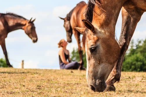 equine-assisted-therapy-treatment