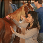 Caring for horses as part of equine therapy at Oxford Treatment Center